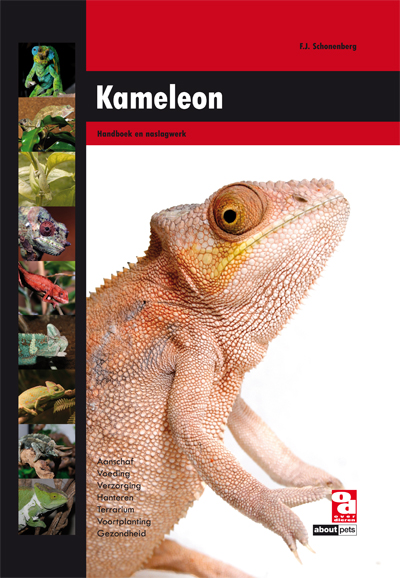 Kameleon (NL)