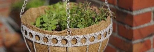 hanging basket met kruiden