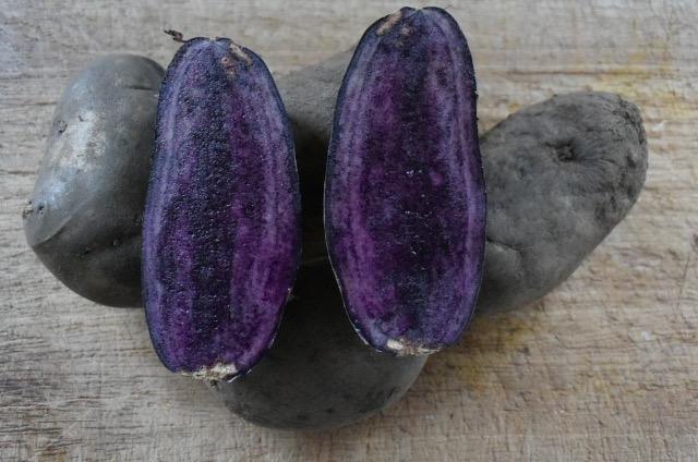 Aardappel - Violetta (paars) kriel