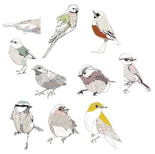 10 Birds Postcards
