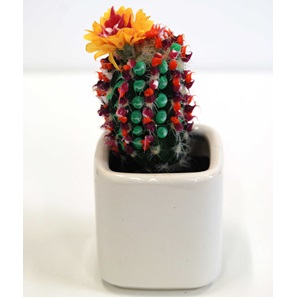 Cactus object 1