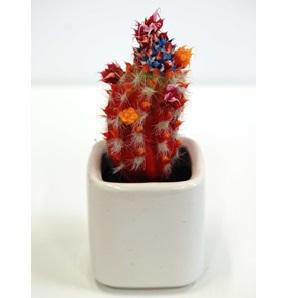 Cactus object 3
