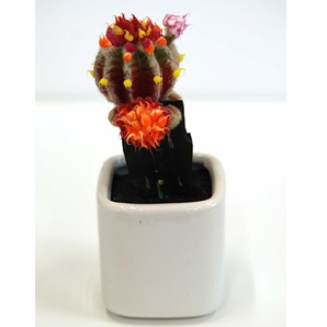 Cactus object 5