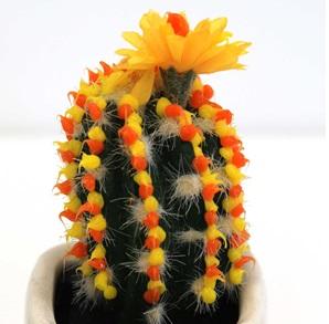 Cactus object 6