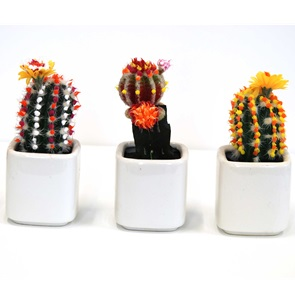 Cactus object 4
