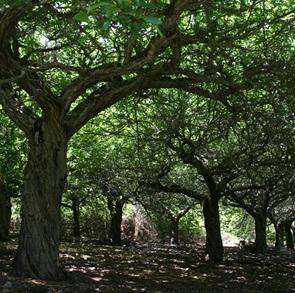 Foto East of Eden