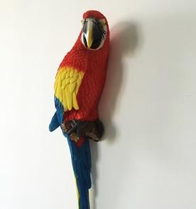 Papegaai Red