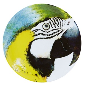 Yellowblue Macaw Plate