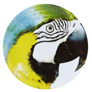 Bird Yellowblue macaw bord
