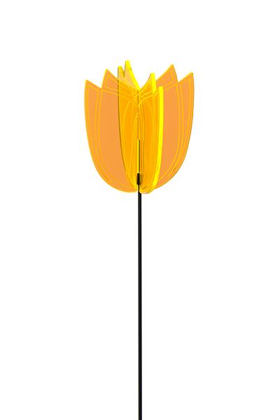 http://myshop.s3-external-3.amazonaws.com/shop2736700.pictures.Soldisk_tulip_geel_400_600.jpg