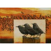 http://myshop.s3-external-3.amazonaws.com/shop28388.pictures.spreeuwen_kl.jpg