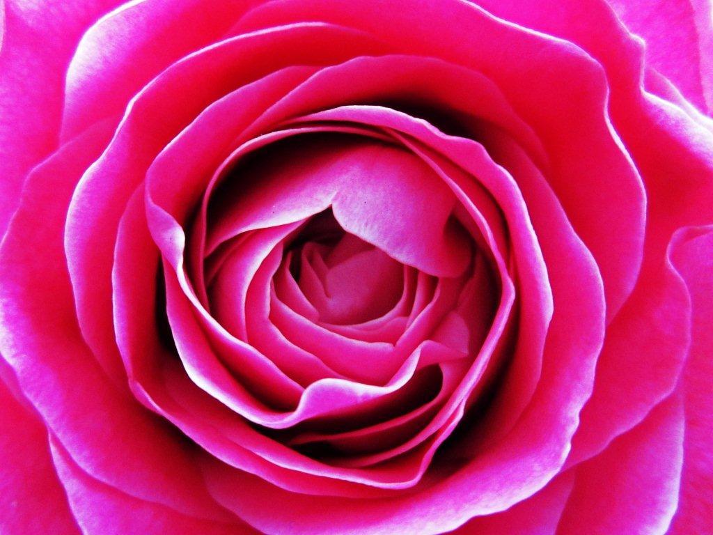 Handgebonden roze rozen
