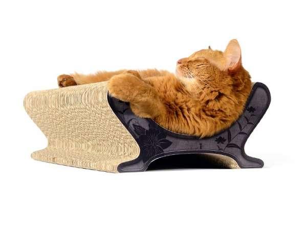 cat maintenance