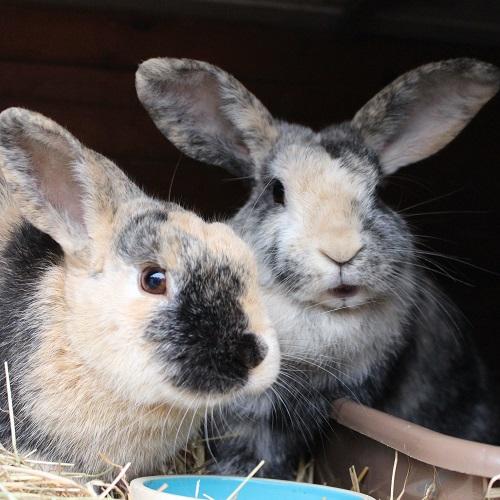 Bo & Ollie