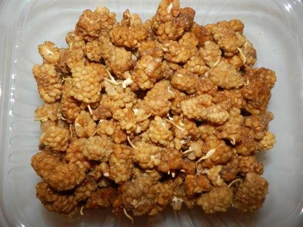 Moerbeibessen (mulberries)