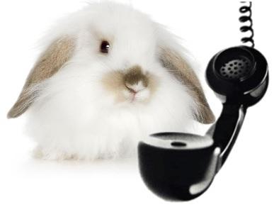 persoonlijk advies over zindelijkheid bij konijnen