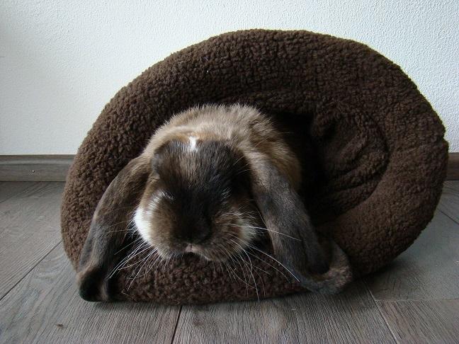 slaapzak beige bruin groot.