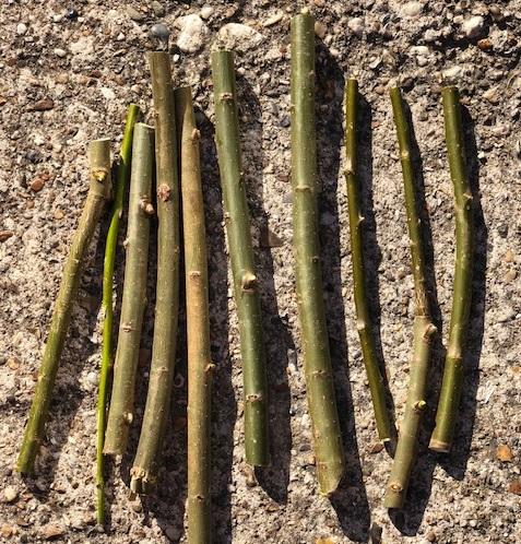 knabbelhout wilgen stokjes