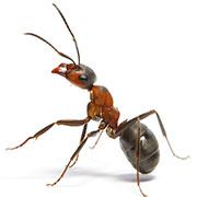 Advies en bestrijding mieren in overige gemeenten
