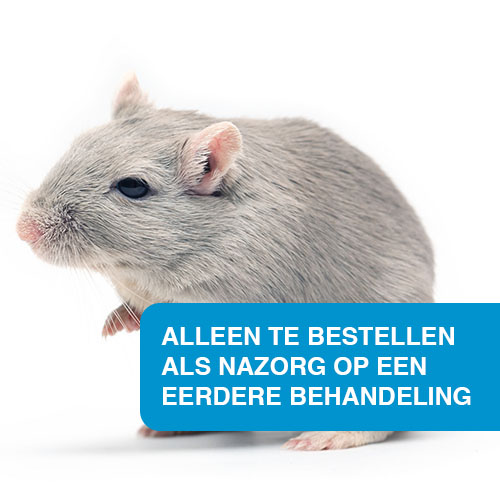 Extra behandeling knaagdieren in Zoetermeer (voor particulieren)
