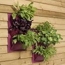 Verti-plant Aubergine