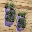 Verti-plant Lavender