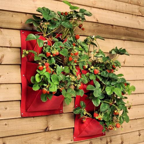Verti-plant Strawberry