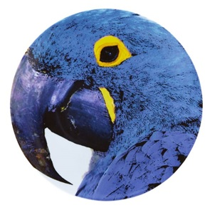 Blue Macaw Bird Plate