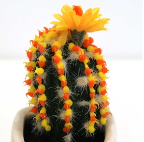 Cactus object 6