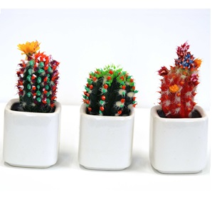 Cactus object two