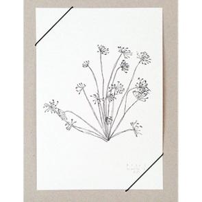 Dill Artprint