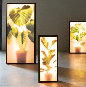 GROW lamp L