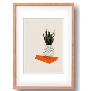 Plant Orange