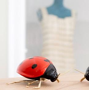 Lieveheersbeestje rood