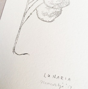 Lunaria Artprint