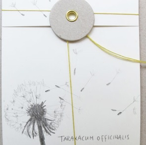 Seedpocket Dandelion