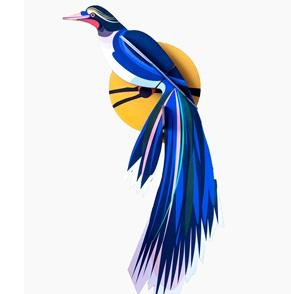 Paradijsvogel Flores*