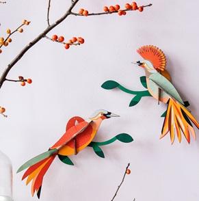 Paradijsvogel Obi*