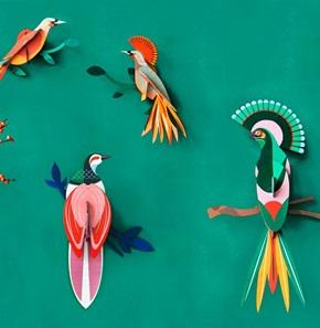 Paradijsvogel Rani*