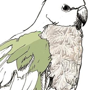 Parakeeth poster A4