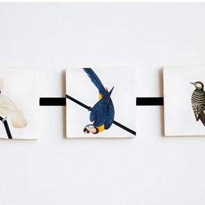 Storytiles Blauwe papegaai*