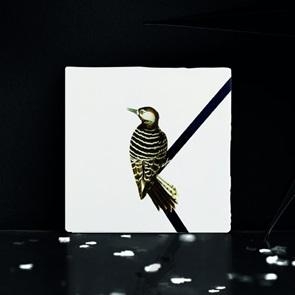 Storytiles Woodpecker