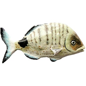 White Seabream wall object