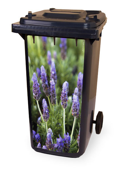 Spring Lavendel