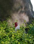 Nieuw Biologisch kippen tuin zadenmix