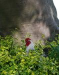Biologisch kippen tuin zadenmix