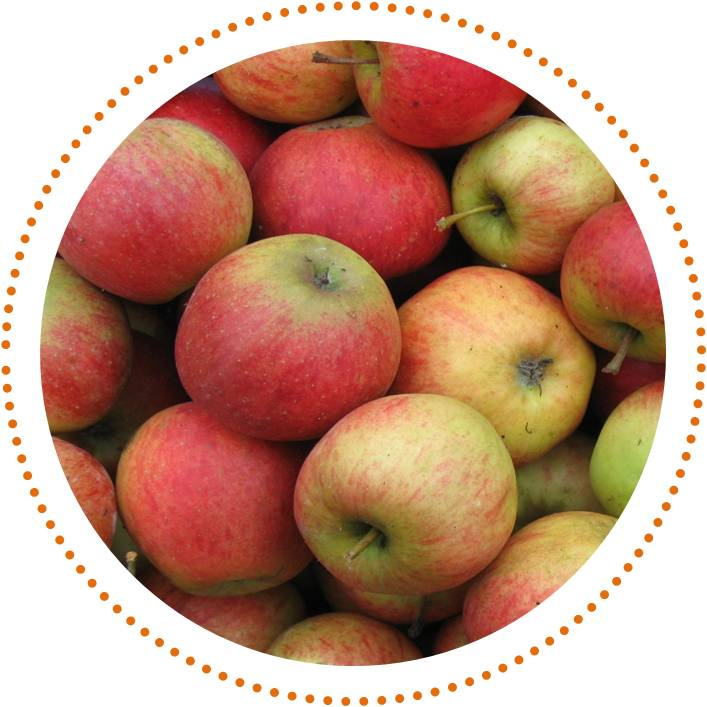 Jamore; meer dan jam. Gemaakt met liefde, biologisch fruit, zonder pectine, met een beetje biologische suiker