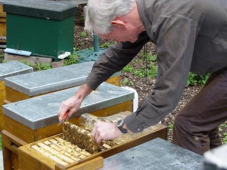 marcel met bijen.jpg