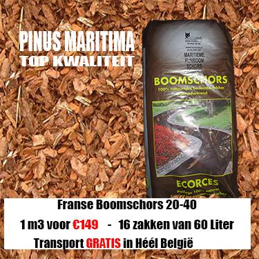 Franse Boomschors Maritima 20-40