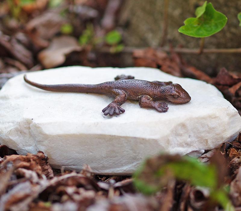 Bronzen beeld salamander